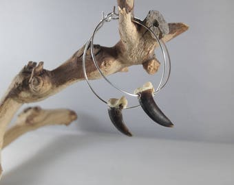 Real Coyote Claw Hoop Earrings / Authentic Taxidermy Jewelry
