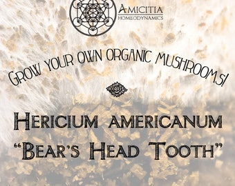 Organic Bear's Head Tooth Sawdust Spawn (Hericium americanum) LIVE MYCELIUM - 50g *PDF Book Included