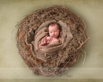 Newborn Nest Digital Backdrop