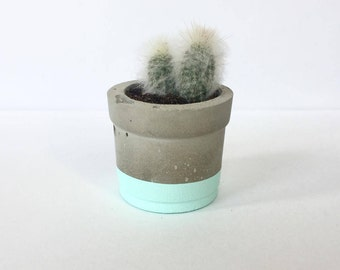 Mini Aqua Concrete Pot with Cactus