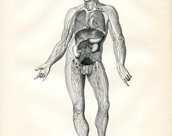 Anatomy-Lymphatic Vascular System. Original Victorian Antique print from the 9th edition of the Encyclopaedia Britannica (1875-1889).