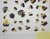 Real Pressed Dried Flowers 30 items Pansy and Viola Ready for your project Craft supply