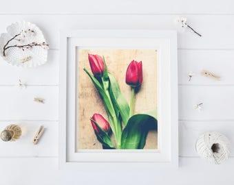 Spring Tulip Photograph - Botanical Wall Art - Flower Photography - Floral Art - Red Green Tan - Modern Rustic Wall Art -Romantic Art