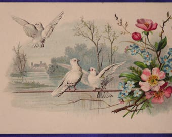 Art 3 Doves Pink Blue Dogwood Flower Early 20th Century Postcard Made Europe