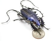 Sapphire Aventurine Longhorn Jewel Beetle - realistic dichroic lampwork glass insect beetle figurine glass artist Wesley Fleming