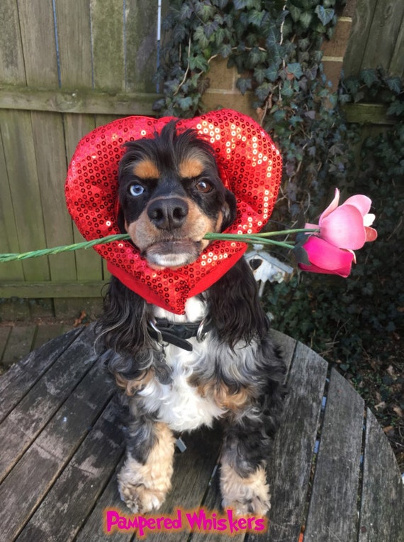 Heart Shaped hat for dogs and cats