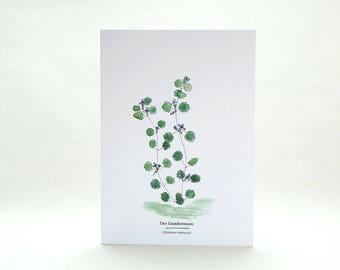 Greeting Card | wildflowers | ground ivy | ecofriendly card with envelope | wilderness | botanical illustration | edible wild foods