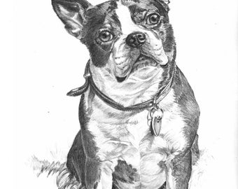Boston Terrier, Trixie - Open edition print of an original drawing (fits 11x14 frame)