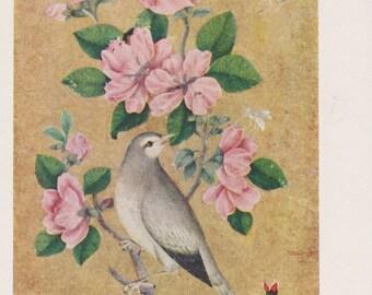 "Yusuf Zaman, Iranian miniature ""Bird"", Postcard -- 1958"