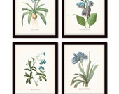 Blue Botanical Print Set No. 7 Redoute Botanical Prints Art Giclee Botanical Prints Illustration Wall Art Flower Prints Blue Flower Prints