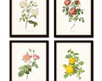 Redoute Roses Print Set No. 6, Botanical Print, Giclee, Art Print, Gallery Wall Art, Flowers,Rose Prints, Illustration, Collage, Flowers
