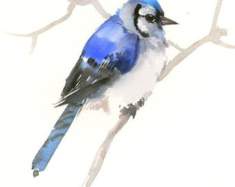Blue Jay Art, 12 x 9 in, one of a kind original watercolor painting blue jay art, bird art blue bird, birds of usa bird lover gift