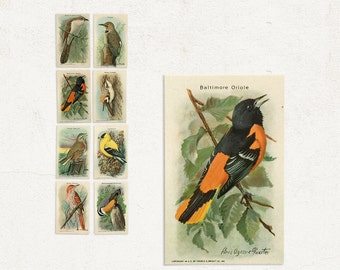 1938 Useful Birds of America Tenth Series / Arm and Hammer Complete Set Advertising Cards from Church and Dwight Co / Louis Agassiz Fuertes