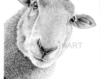 Sheep Art Print - Hand Signed Pencil Drawing A5 Print (UK Artist)