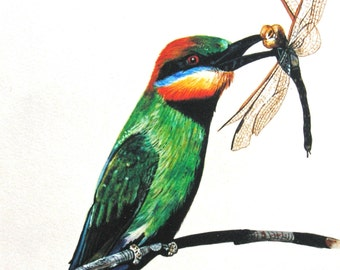 Greeting Card - Rainbow Bee-eater, Australian Bird, Brightly Coloured Bird, Dragonfly,Bird with dragonfly in beak