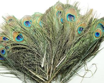 Lot de 10 plumes naturelles de paon, 20-30 cm