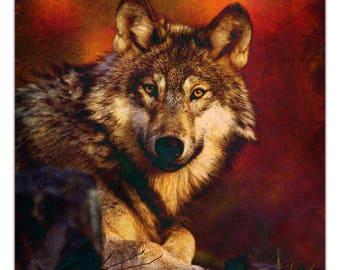 Fine Art Print of a beautiful Wolf. Wolf Photography, Wolf Art, Wolf Photo, Wolf Decor, Wolf Wall Art, Modern Wall Art