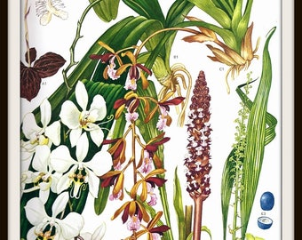 Wildflower Botanical Print #32 (1970): Asian Plants, Frameable Floral Wall Art, Orchids Lilies, Botany Picture, Green Brown, White Flowers