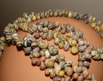 """Natural 36"""" Inches RARE Color Shell Necklace."""