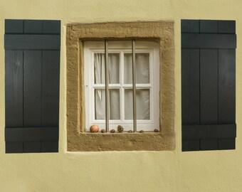 Exterior window shutters horse decor window shutters house
