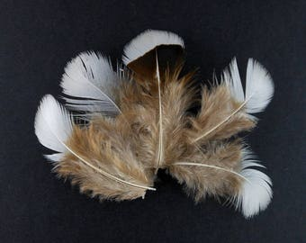 x 10 small 5 to 10cm cream beige feathers (75)