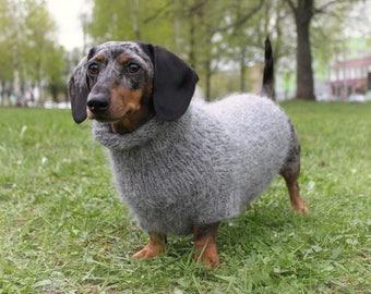 Big Dog Wearing Sweater Dachshund sweat...