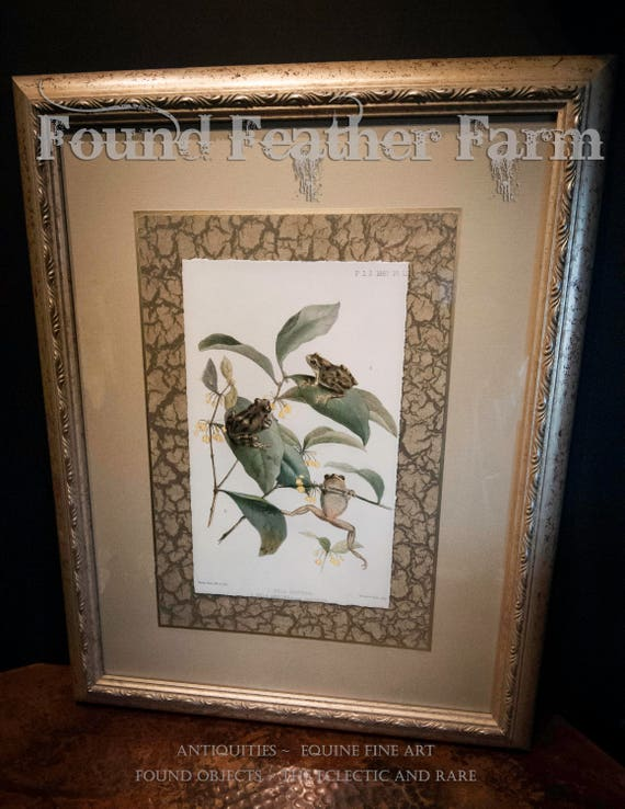 Vintage Framed Trio of Frogs Lithograph