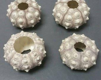 Sputnik Sea Urchins  (Small)  (3 Urchins)