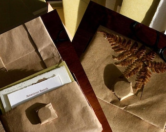 Woodland Companion Series - Wild Ozark Nature Note Cards