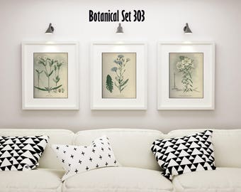 White Flower Print Set of 3, Botanical Prints, Antique Botanical, White Flowers, Floral Wall Art, Bedroom Decor, Botanical Illustrations