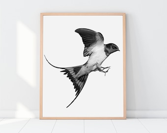 Bird Prints, Nature Prints, Bird, Birds, Black and White, Photography, Photo, Animal Print, Animal, Wall Decor, Art Print, Printable Gift