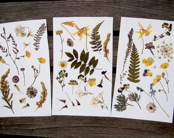 Preserved flowers etsy for Dried flowers craft supplies