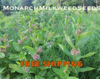 300+ COMMON MILKWEED SEEDS (Asclepias Syriaca) Home & Garden Perennial Wildflower Plants for Monarch Butterflies and Bees (Free Shipping)!