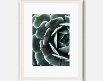 Cactus Printable, succulent print, Cactus Art, Cacti Prints, Desert Poster, cactus Modern Print, Green photography, Succulent Artwork
