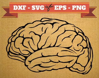 Format .dxf Brain SVG - CNC file cut - vinyl vector - Cricut- file Dxf Svg Eps Png