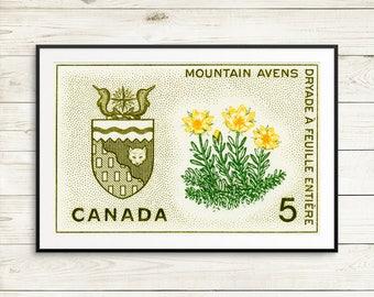 P148 Northwest Territories, NWT, NWT Canada, Yellowknife NWT, Great Bear Lake, Mountain Avens, wildflowers Canada, Canadian North