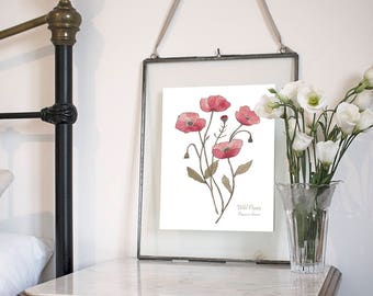 Wild Poppy, Botanical Wildflower Watercolour, Art Print