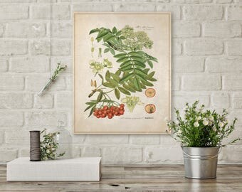 Green Fern, Vintage Canvas, Berries on Canvas, Ferns on Canvas, Botanical Canvas, Vintage Art, Nature Canvas, Wall Decor, Wall Art