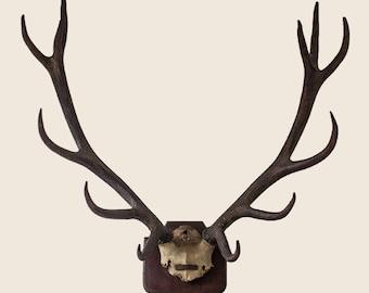 Vintage 12 Point Red Stag Antlers