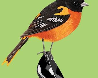 Baltimore Oriole Bird Print, Baltimore Oriole Poster, Baltimore Oriole Poster, Bird Illustration, Bird Art, Baltimore Oriole Art