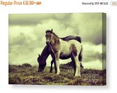 SALE 15% Signed Canvas print of a Foal and pony Dartmoor UK equine equestrian horse animal nature gift present christmas love riding rider d