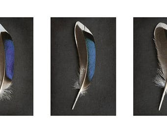 Alyson Fennell (Sapphire Mallard Feather Triptych) Art Print 50 x 100cm  PPR41163