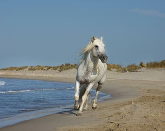 Camargue Stallion on beach - fine art print - Photographic print - Horses of the Camargue - Horses