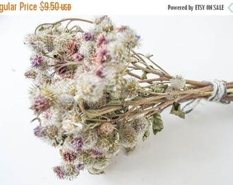 ON SALE Dried flowers of burdock, cockleburs, burdock, field, natural material, home decor