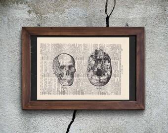 Print Skull No. 6-on Antique page-landscape format