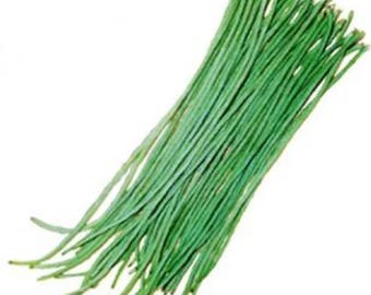 Sitaw 20 Seeds Sitao Long Green Beans  Philippine Bureau of Plant Industry 20 Seeds Pinoy Vegetable