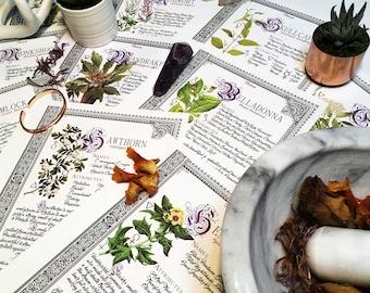10 Herbarium Bundle #5  - INSTANT DOWNLOAD Book of Shadows Pages : Belladonna, Mandrake, Mugwort and more