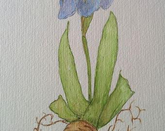 "Watercolor ""Blue Iris"" framed original"