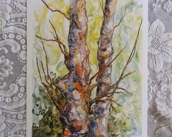 River Birch trees, Hertford, Perquiman's River, watercolor print, tree art, birch trees, winner of Best in Show