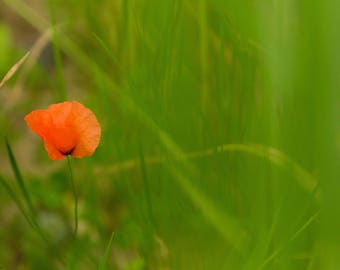 Alone flower - Photography art - Art photo - Nature - Flower photo - Macro Photo - Colorful -